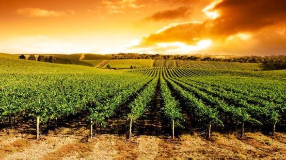 Viñas y cambio climático